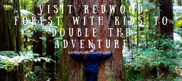 Visit Redwood Forest With Kids